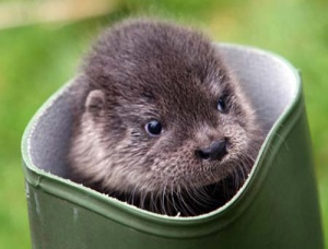 This otter is also not related to this blog post but damn, it's adorable, amiright?